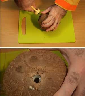 Cómo sacar el agua del interior de un coco